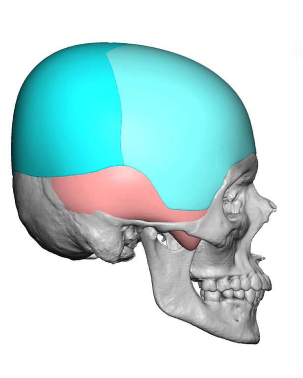 Skull Appearance packages   Healtha - Medical Tourism in Iran